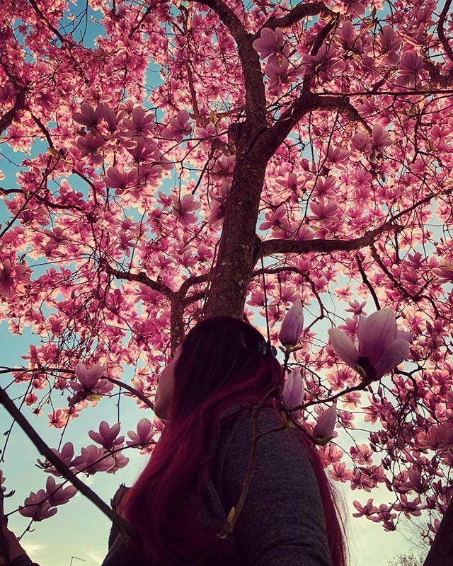 mùa hoa mộc lan