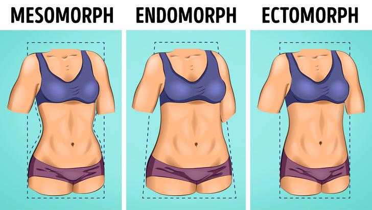 3 kiểu hình dạng cơ thể con người