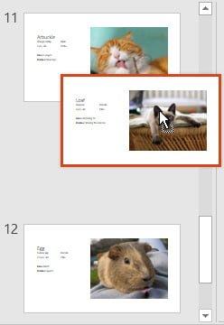 Khái niệm cơ bản về slide cho Powerpoint 2016